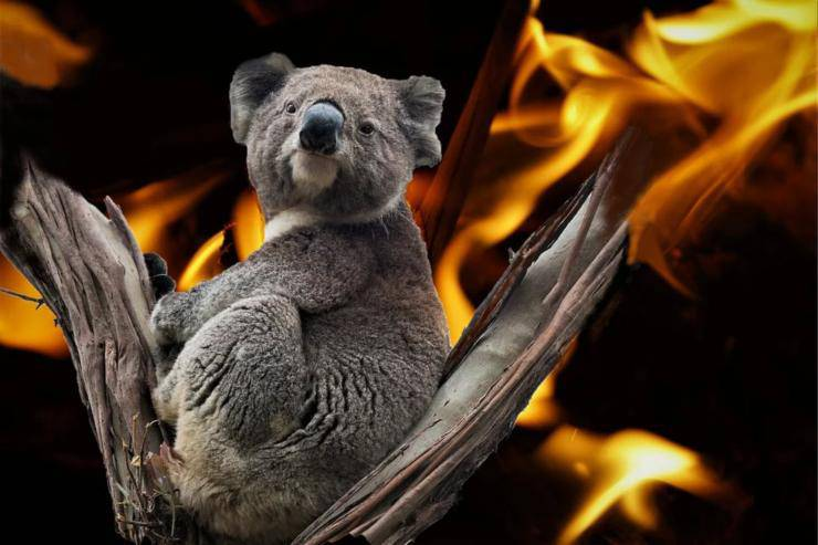 droni salvare animali incendi