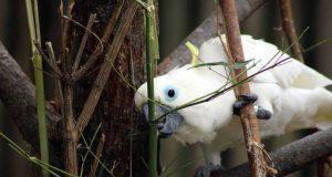 l intelligenza dei pappagalli