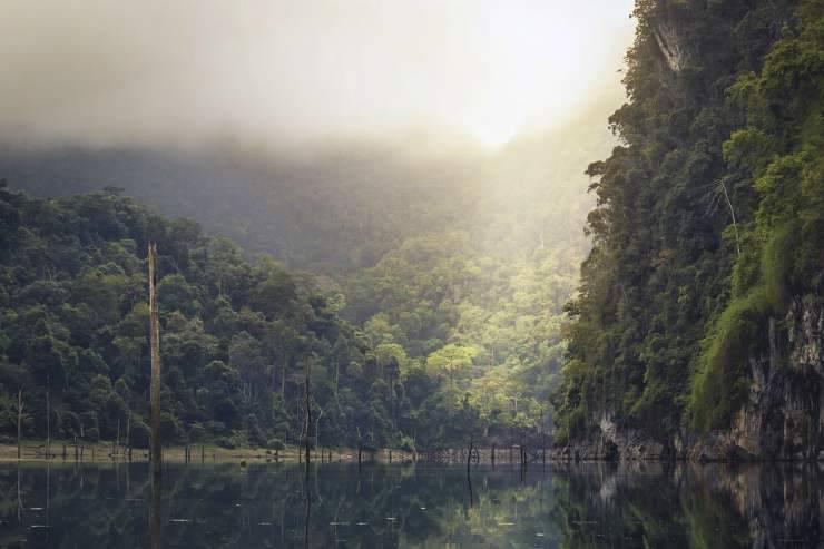 foresta pluviale (Foto Pixabay)