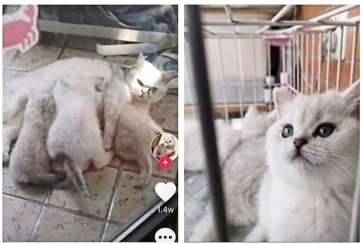 Gatto partorisce