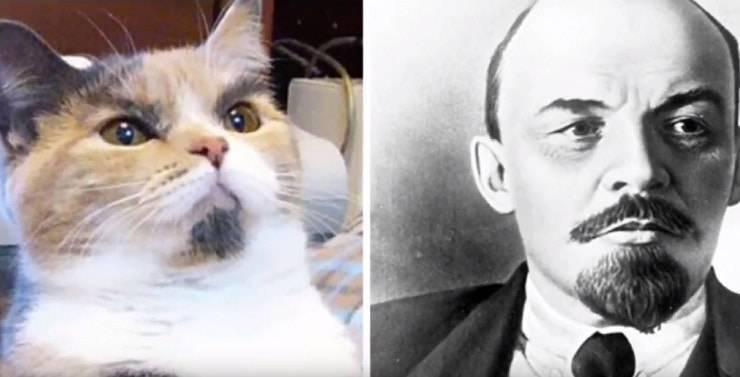 gatto Lenin
