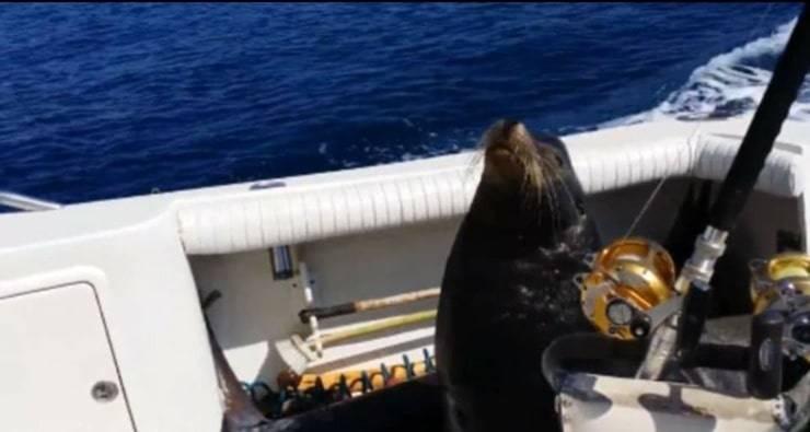 Leone Marino sale sulla barca