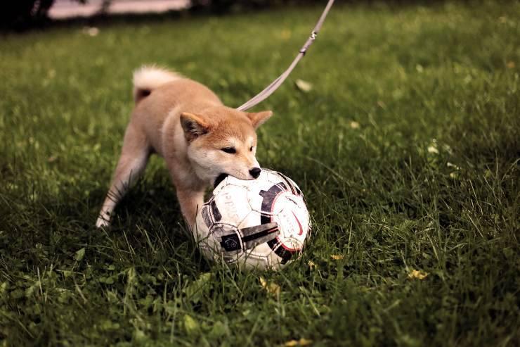 cane palla gioco