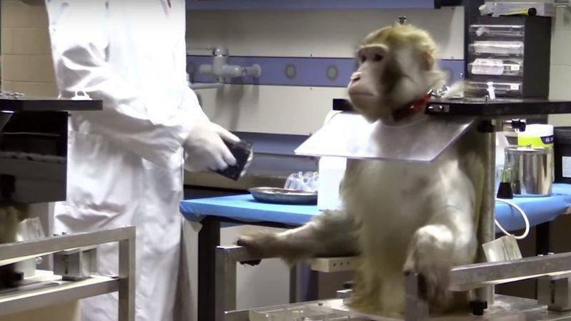 Sperimentazione sugli animali Telethon