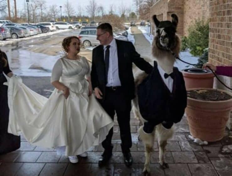 lama al matrimonio