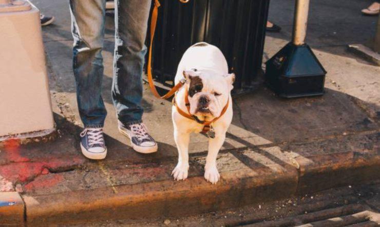 cane spasso vivo sindaco
