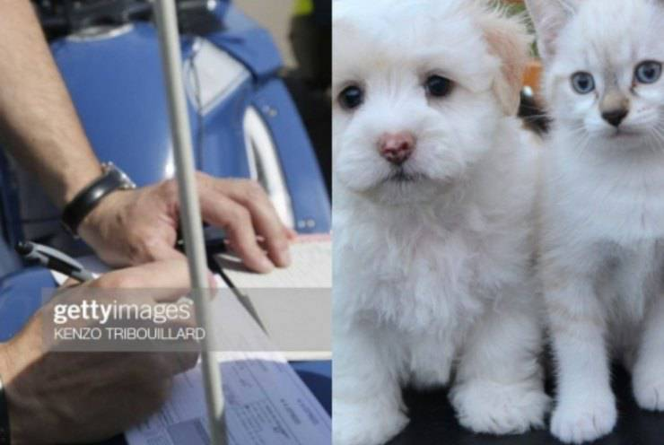 censimento obbligatorio animali domestici