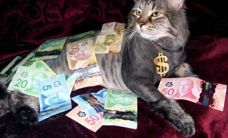 730 detrazioni fiscali animali