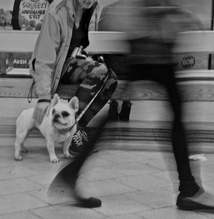 Cane sui mezzi pubblici