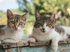Falsi miti sui gatti