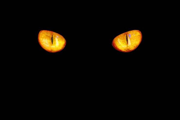 occhi felino