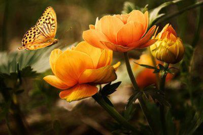 insetti fiori natura