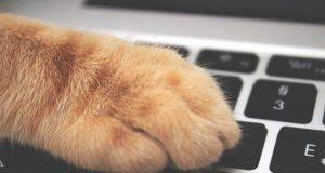 gatto noia pc