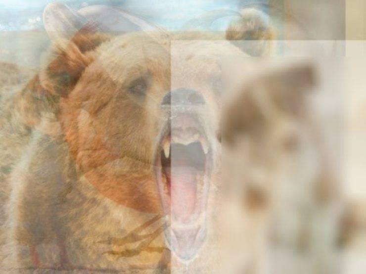 orso animale vedi per primo risultato