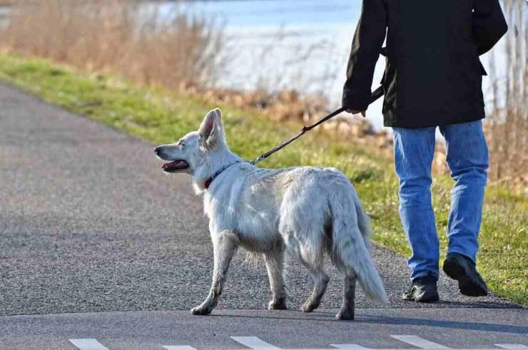 zona rossa portare cane spasso
