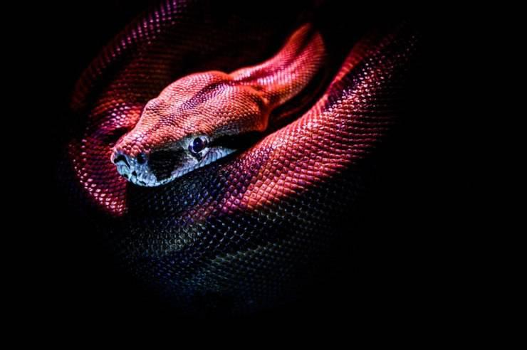 sognare un serpente significato
