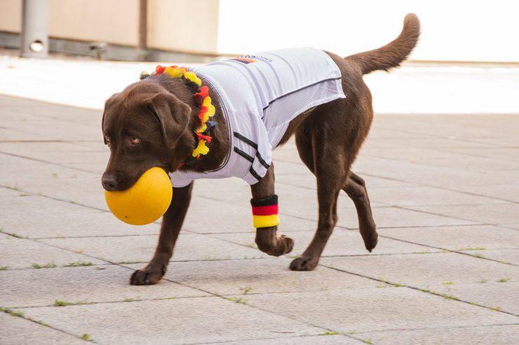 cane calcio maglietta