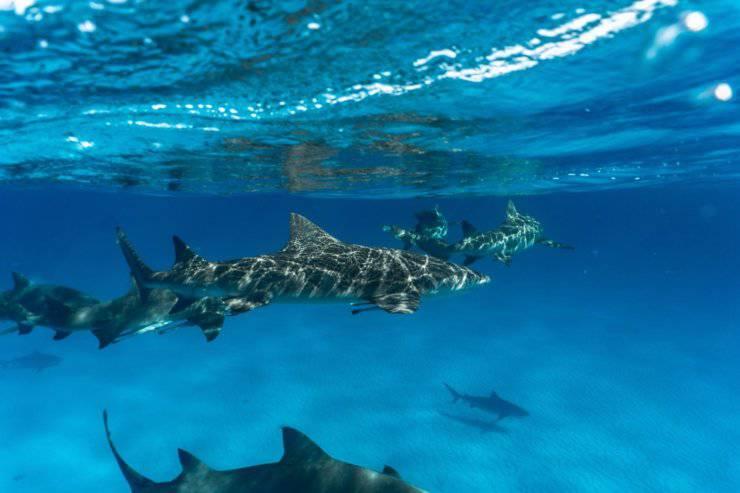 non avere paura squalo