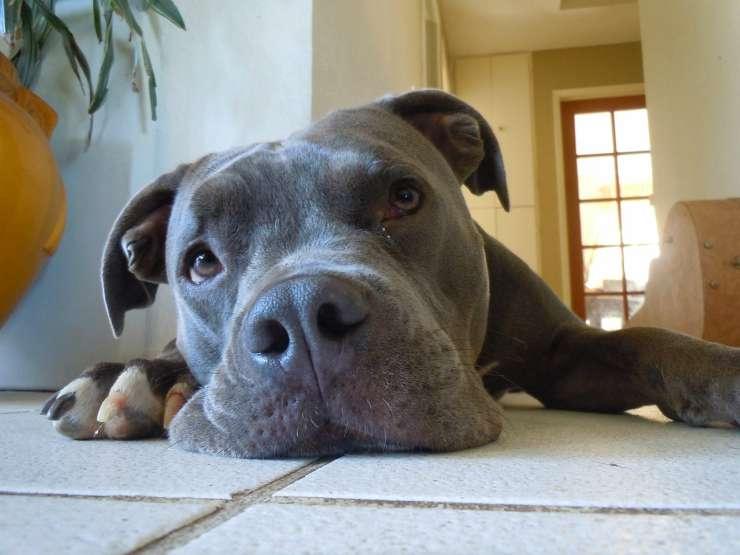 Il cane triste (Foto Facebook)