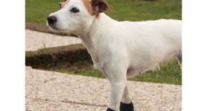 scarpe per cani consigli