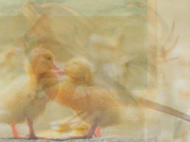 anatroccoli animali vedi primi immagine