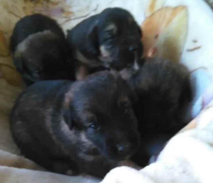 I cuccioli nella buca (Foto Facebook)