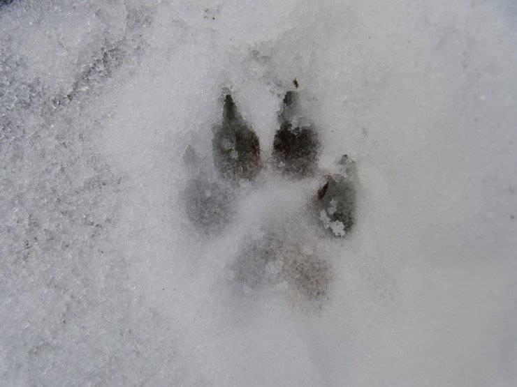 legge animali lasciati al freddo