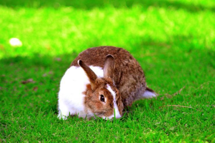 Stress del coniglio