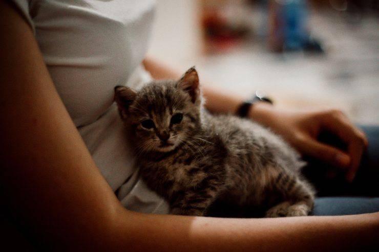 sostanze nutritive gattino