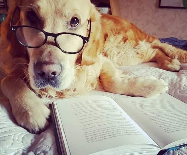 Libri sui cani per pambini