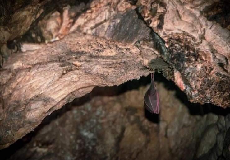 Animali delle caverne