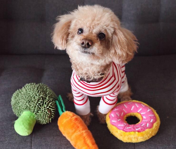 cane cibo peluche