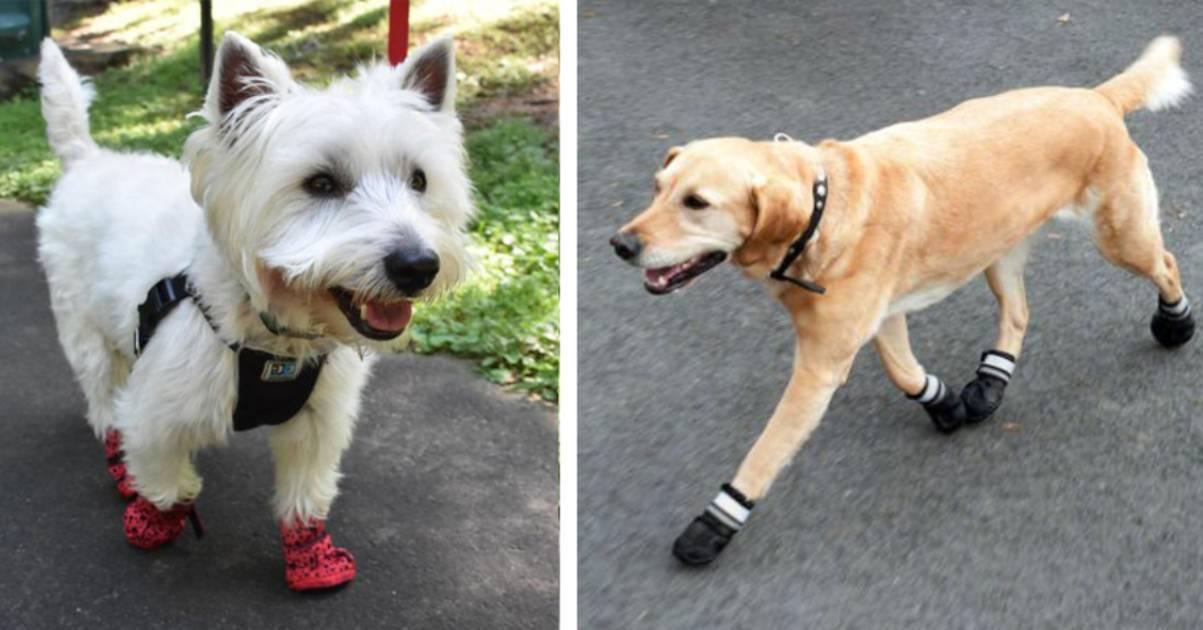 emergenza coronavirus scarpe per cani