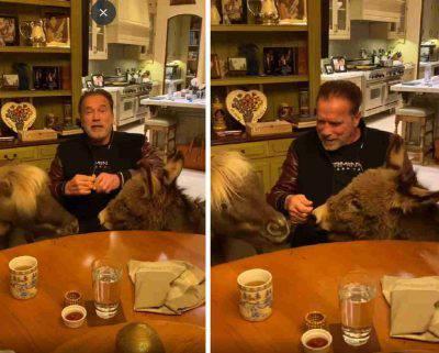 Arnold Schwarzenegger animali coronavirus
