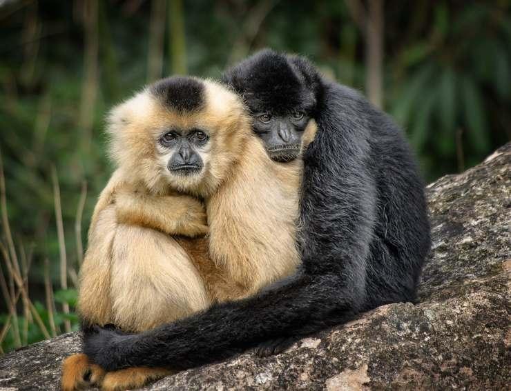In che animale riconosci il tuo partner