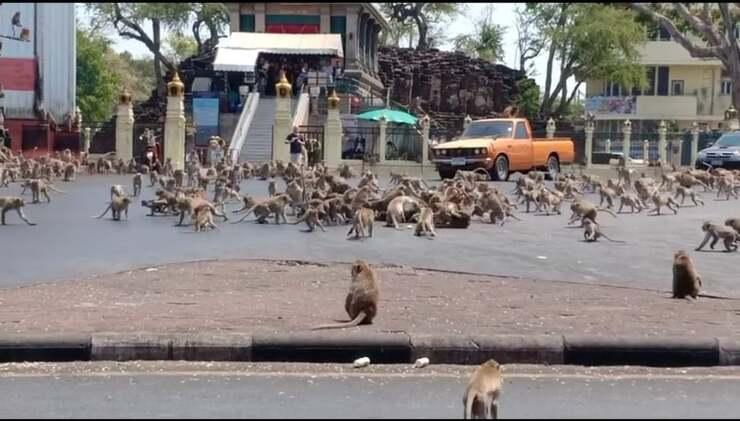 Scimmie invadono la Thailandia