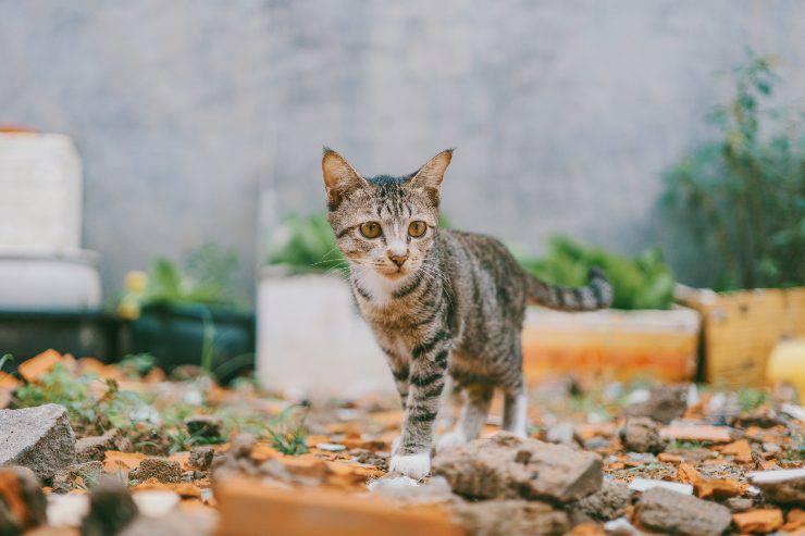 Cose velenose per il gatto