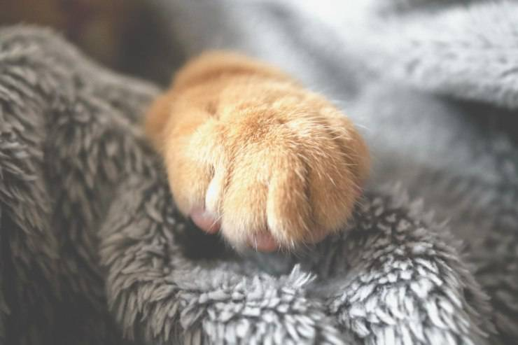 zampe gatto pulire