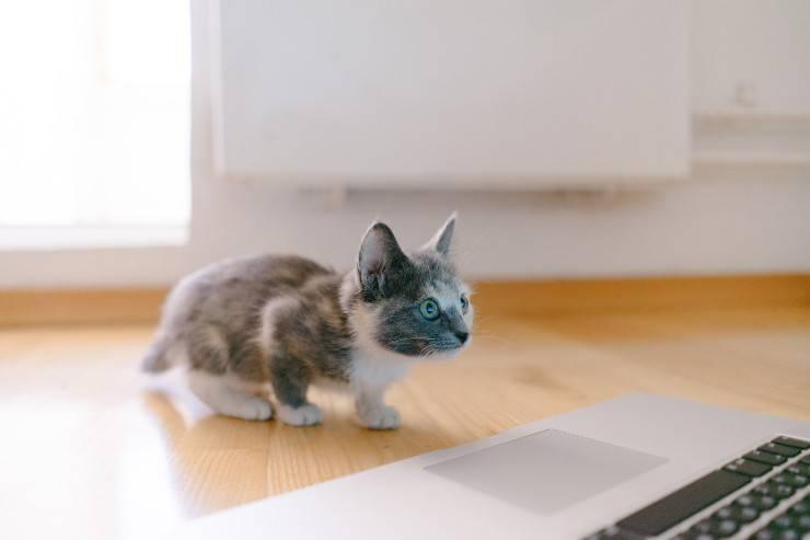 nuovo gatto a casa