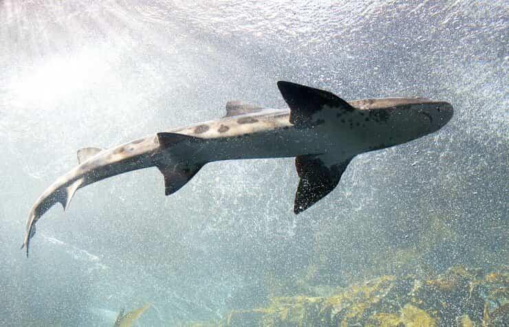 non avere paura squali
