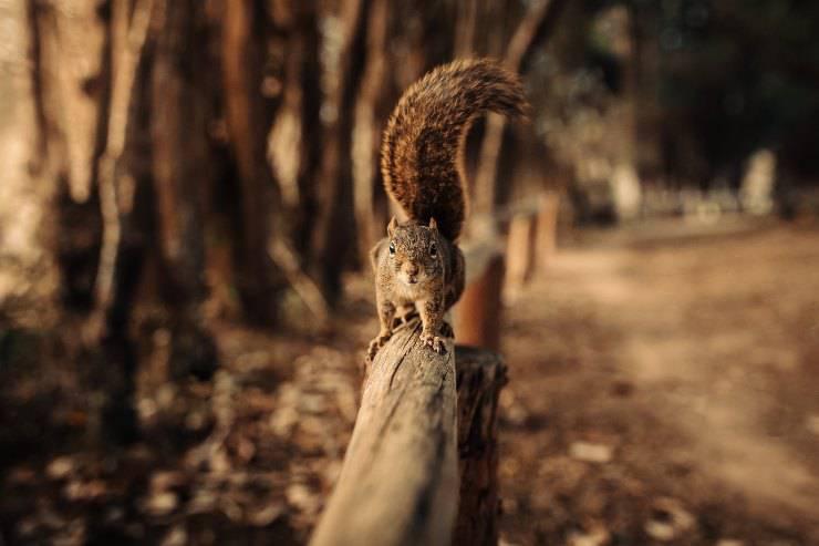 scoiattoli piantano alberi