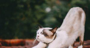 gatto stress infarto