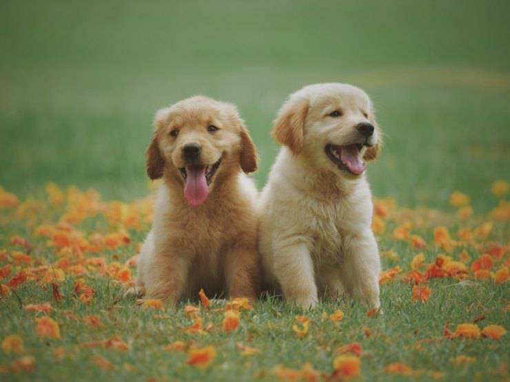 cani cuccioli primavera