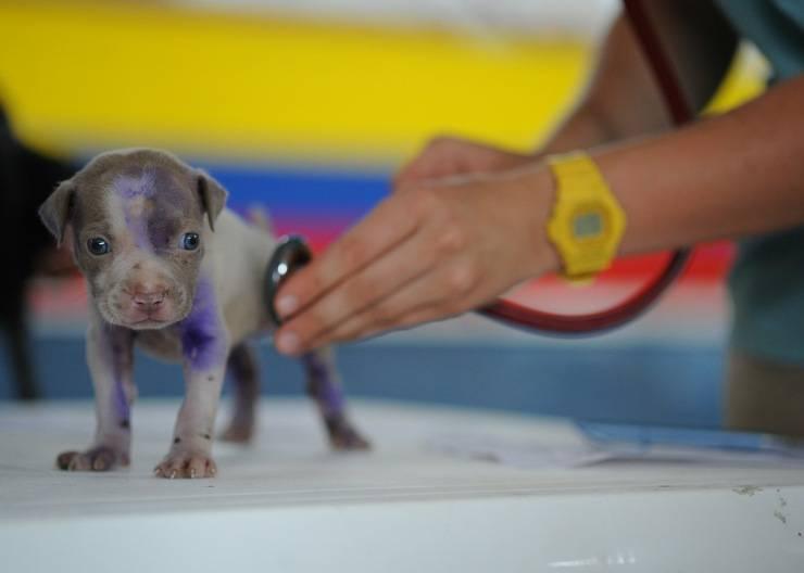 italia zona rossa animali veterinario urgenze decreto