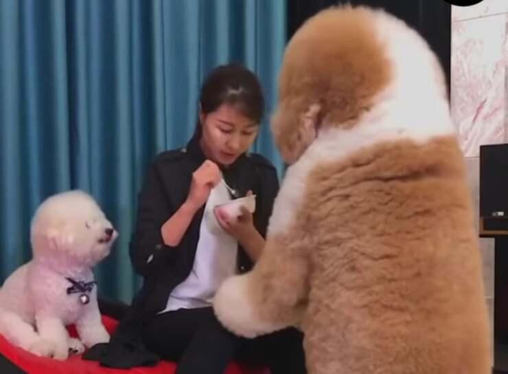 video cuccioli