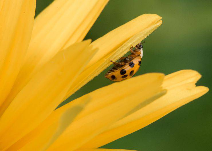 Curiosità sullo scarabeo