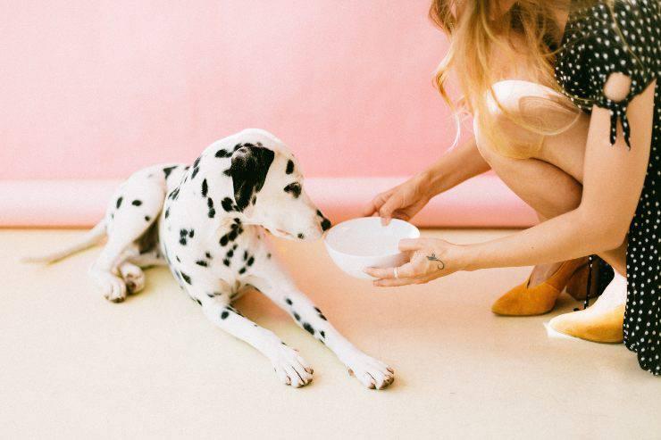 Cibo adatto ai cuccioli