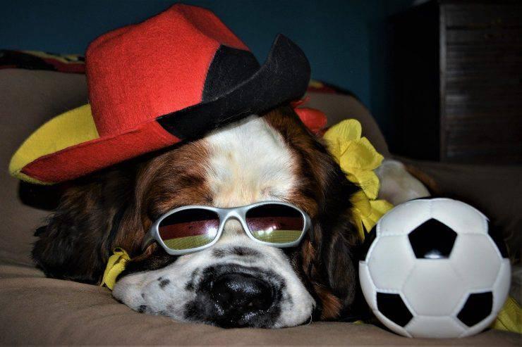 insegnare calcio cane