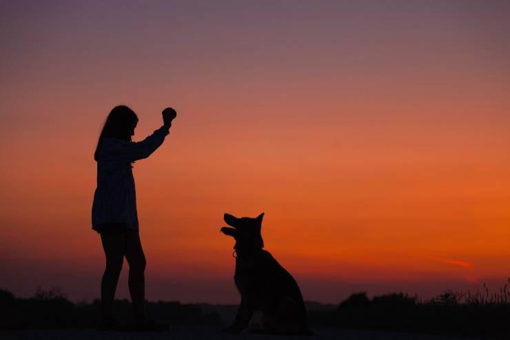 segnali d'amore del cane