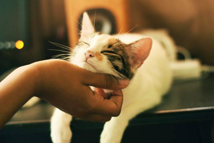 gatto appiccicoso